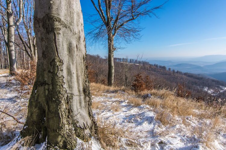 Bare Tree Tree Tranquility Nature Winter Tranquil Scene Beauty In Nature Tree Trunk Snow Landscape Cold Temperature Day No People Scenics Sky Forest Outdoors Borzsony Hungary Water
