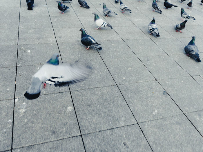 High angle view of birds flying on street