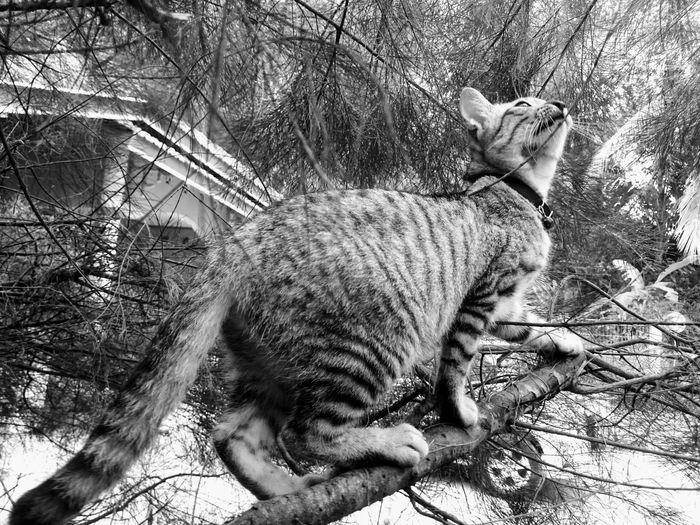 Cat on bare tree