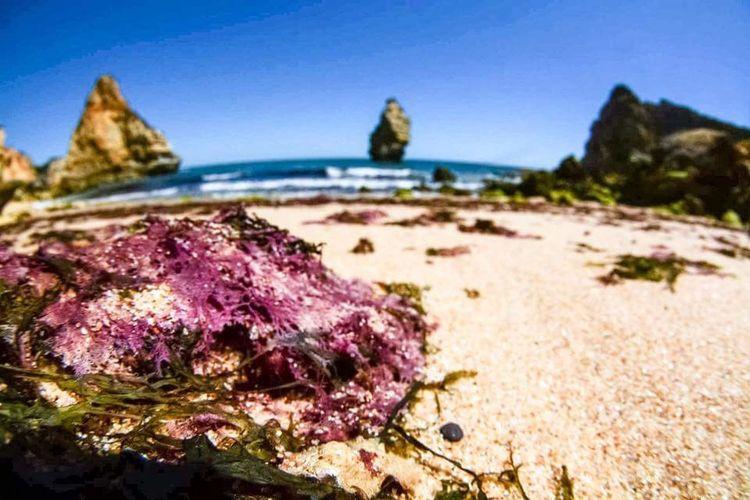 Sea Coral Sea
