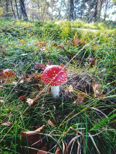Autumn Colors From My Point Of View Natures Treasures Taking Photos Pretty Little Mushroom A Sunny Autumn Day