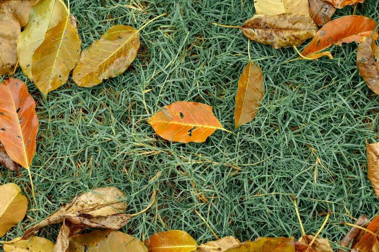 High angle view of dry leaves on field during autumn