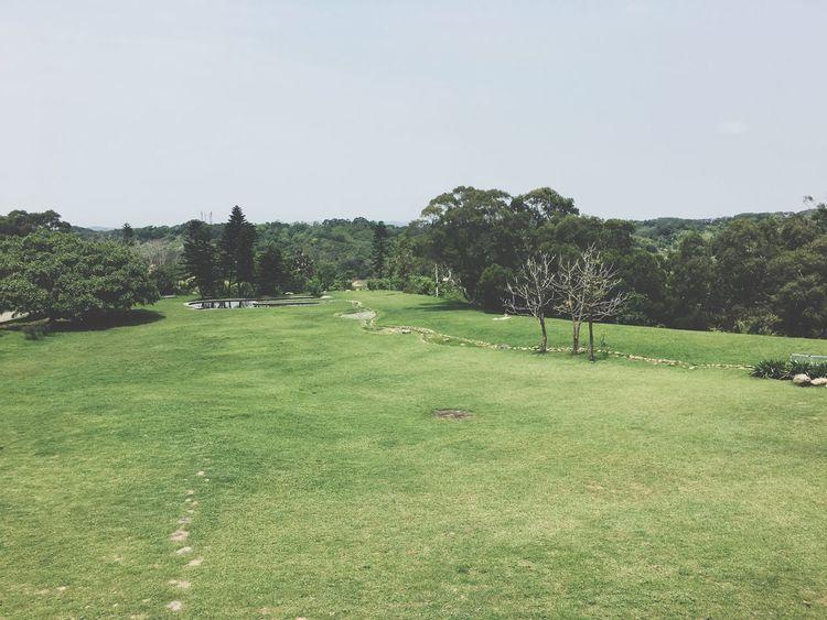 在這片草原,身心也都跟著放鬆了 The View And The Spirit Of Taiwan 台灣景 台灣情 EyeEm - Taiwan EyeEm Taiwan Travel Tree Nature Grass Tranquility Green Color Growth Beauty In Nature Tranquil Scene Landscape Clear Sky No People Scenics Field Outdoors Day Sky Scenery Golf Course Green - Golf Course