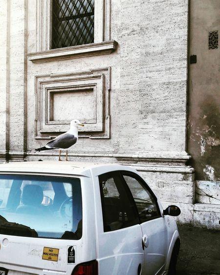 Bird perching on car