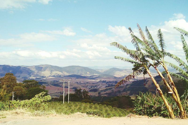 Landscape Nature Mountain Range Palm Trees Brazil On The Road