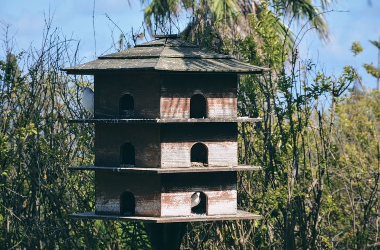 Dovecote with two doves peeking. Animal Architecture Architecture Beauty In Nature Bird Day Dove Dovecote Flight Grass Growth Nature No People Outdoors Plant Sky Tree Wood Birdhouse EyeEmNewHere Sommergefühle