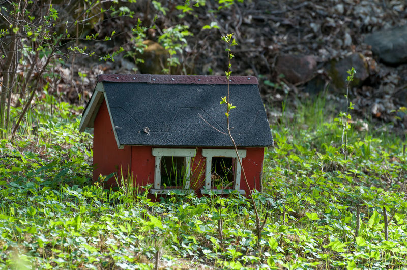 Plants growing on field by abandoned house in forest