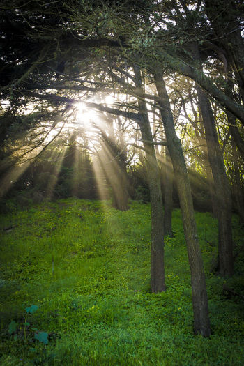 Rays of Light Beams Of Light Beauty In Nature Day Forest Grass Growth Landscape Light Nature No People Outdoors Rain Sunlight Tranquility Tree Tree Trunk