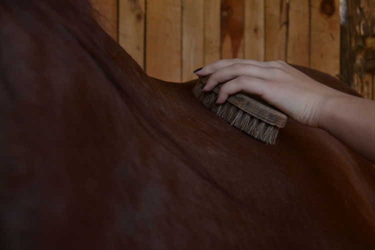 Cropped hand of woman cleaning horse at barn