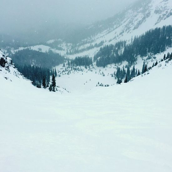 Fresh Powder at Black Iron Bowl, Telluride