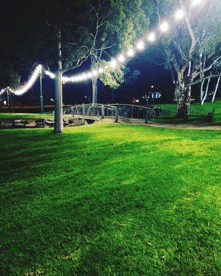 Winter Inthepark Lights