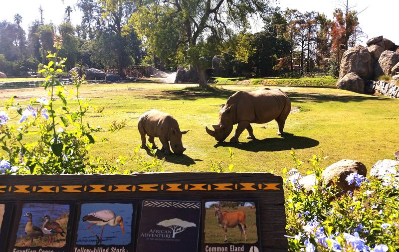 Outdoors Mammal Nature Rhinoceros Zoo Travel Vacations Animals Fresno Zoo
