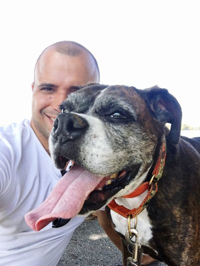 Dog Canine One Animal Domestic Pets Mammal Domestic Animals