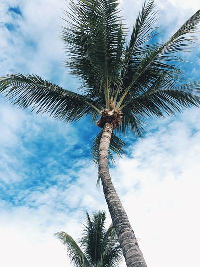 Palm trees Photography Sombrero Beach Sombrero Beach Florida Florida Marathon Key Palm Tree Summer Sky Clouds