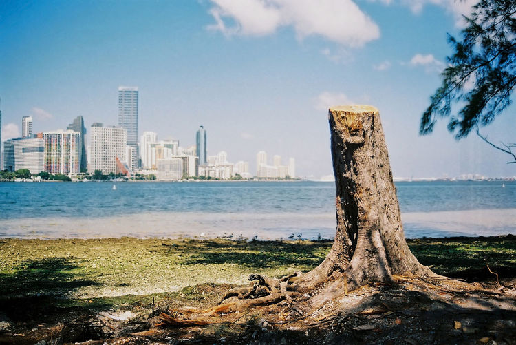 Water Architecture Sky Tree Nature City Plant Sea Beach Day Urban Skyline Building Wood Cityscape Driftwood Ocean Forest Cut Tree First Eyeem Photo