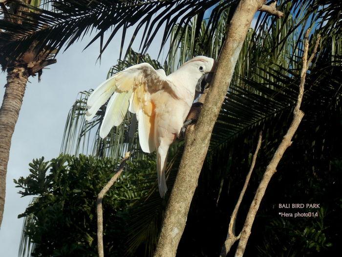 Balibirdpark Birds