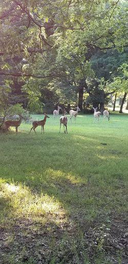 Deer Tree Field
