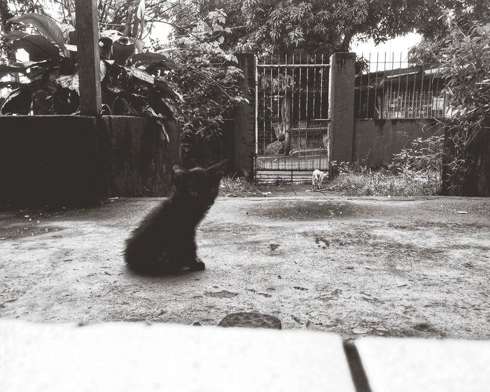 Black&white Photography Catlover ♡ Mymiti