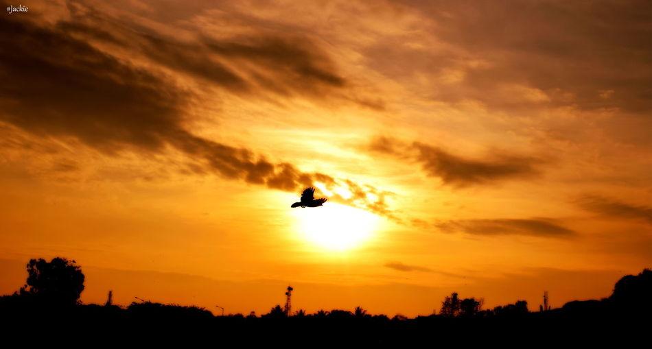 Fly high!!!! Bengaluru Bird Bird Photography Cloud - Sky Nammabengaluru Nature Outdoors Scenics Sunset