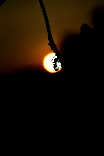 Close-up of insect at sunset