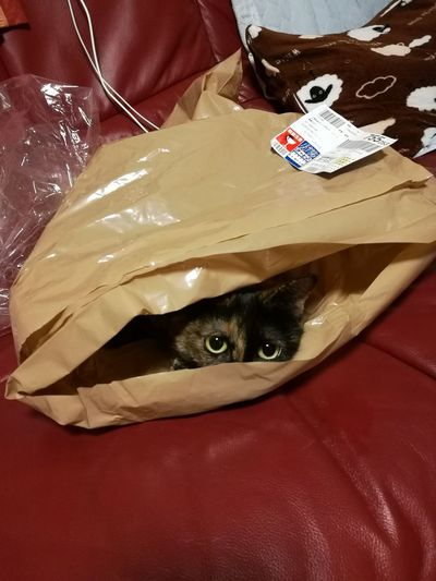 Portrait Of Cat Hiding In Package On Couch At Home