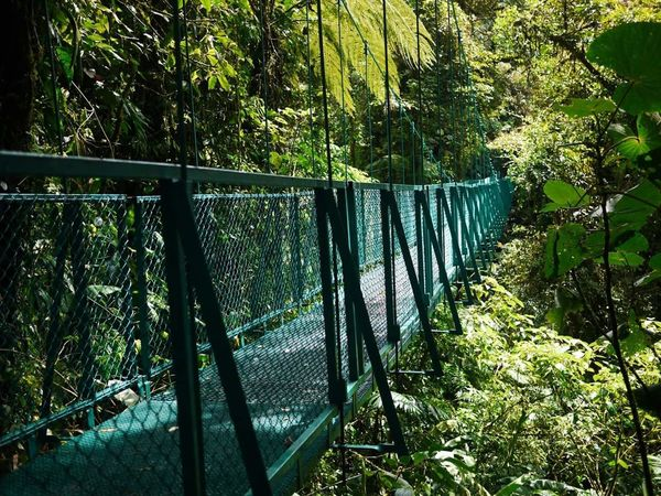 Tree No People Green Color Outdoors Nature Over The Trees Tropical Climate Jungle Costa Rica Tropical Paradise Journey Travel Adventure Tree Area Cable Bridge