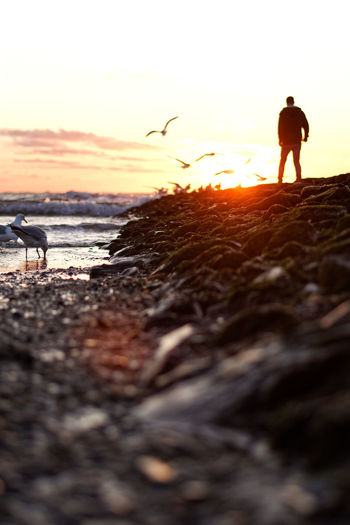 Walking to Heaven Sunset Beach Silhouette Sea Nature Sky Lifestyles Horizon Over Water Outdoors Seascape Ocean Nordsee Ostfriesland Deutschland Seagull Bird Horizon Wallpaper Portrait Strand Insel Moments Of Happiness