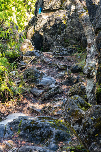 Landscape_Collection Nature Nature Photography Tranquility Landscape Landscape_photography Nature_collection Rock - Object Scerenity Stream Stream - Flowing Water