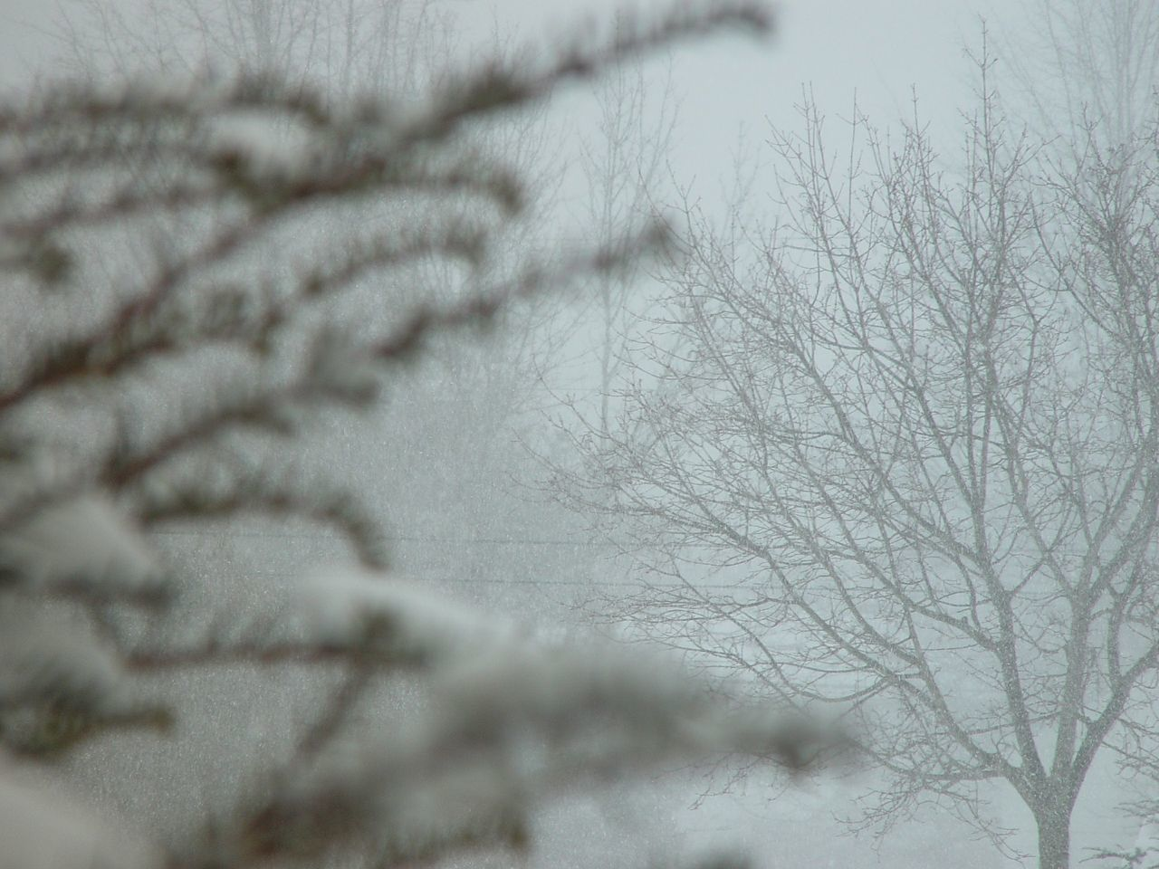 winter, bare tree, cold temperature, close-up, nature, day, no people, indoors, snow, beauty in nature, tree