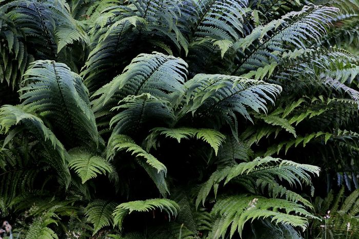 Summer Ferns Summer Green Forest This Morning Walking Around Check This Out Hello World Relaxing Enjoying Life