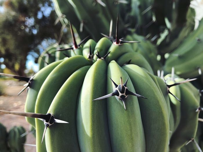 Close-up of bananas on tree