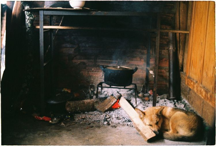 Dog sleeping by wood burning stove