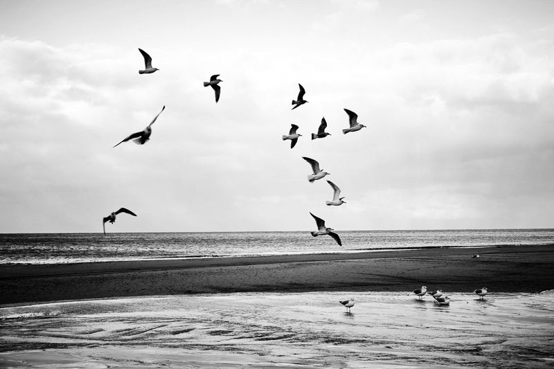 Animal Themes Animals In The Wild Beach Beauty In Nature Bird Cloud - Sky Day Flock Of Birds Flying Full Length Horizon Over Water Large Group Of Animals Mid-air Motion Nature Outdoors Real People Sand Scenics Sea Sky Spread Wings Water Wave The Great Outdoors - 2017 EyeEm Awards