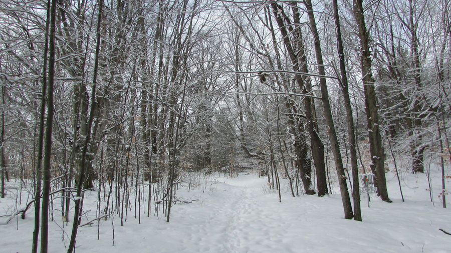 Beauty In Nature Cadillac Michigan Coolplace Diggins Trail Footprints In Snow Quiet Places Snowy Forest Winter Wonderland
