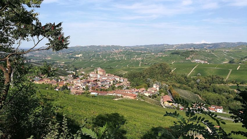 Barolo Wineyards Agriculture Barolo Landscape Nature Outdoors