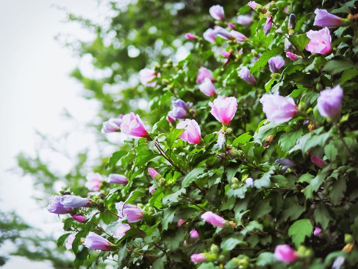 Summer in Korea: pluviophile heaven Faces Of Summer Pluviophile Feeling Blue Relaxing Nature Landscapes Korea Flowers Green