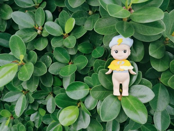 Doll Nature Close-up No People Green Color Leaf Tree Plant Collection Toy Hobby Sonnyangel Kewpie Kewpie Doll Sky Love Mini Figure Figure Bangkok Thailand Sommergefühle