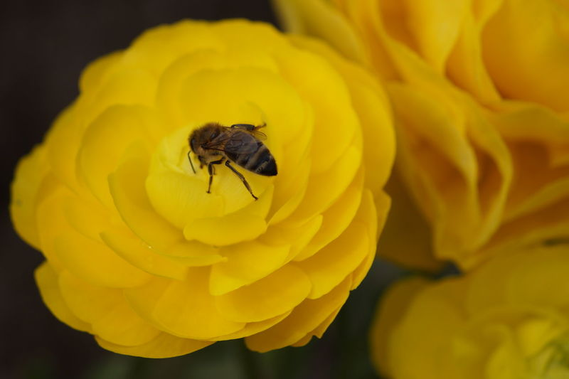 Beauty In Nature Bee Flower Head Insect No People Outdoors Pollination Wildlife Yellow