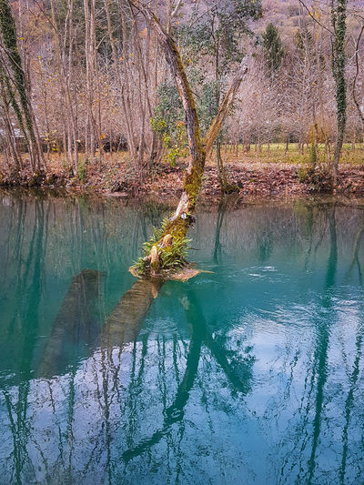 Water Tree Lake Reflection Sky