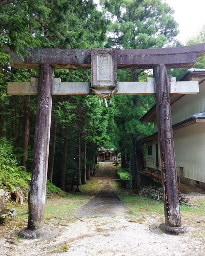 Shrine Of Japan Relax Place One Of My Favorite Place Tree Green Color