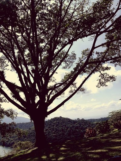 Tree Nature Growth Tranquility Tranquil Scene Mountain Single Tree Outdoors Beauty In Nature No People Landscape Green Nature Costa Rica Y Su Naturaleza Nature Reserve Clouds Laguna Nature Beauty In Nature Paradise Travel Destinations Beauty
