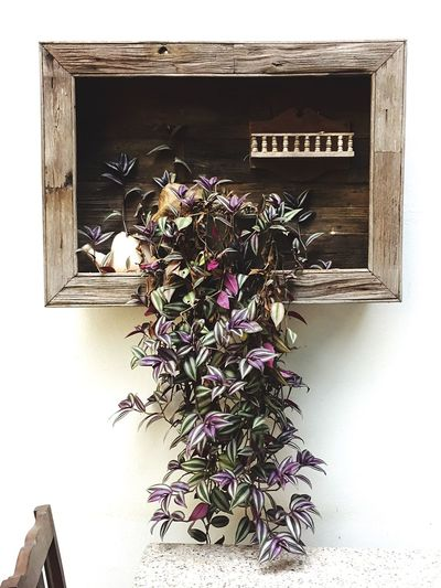 Flower Plant No People Fragility Nature Beauty In Nature Freshness Day Indoors  Close-up Flower Head Thailand Decoration Plant Frame Living Room Table