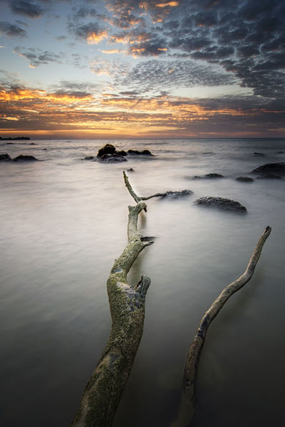 Tree under beautiful sky Beach Beauty In Nature Cloud - Sky Driftwood Horizon Horizon Over Water Idyllic Land Nature No People Non-urban Scene Outdoors Reflection Scenics - Nature Sea Sky Sunset Tranquil Scene Tranquility Water