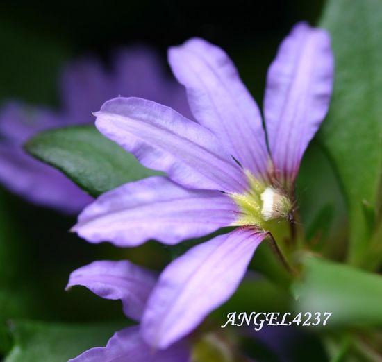 Floralperfection BeautyAndMadness Eye Em Nature Lover Most Stunning Shot