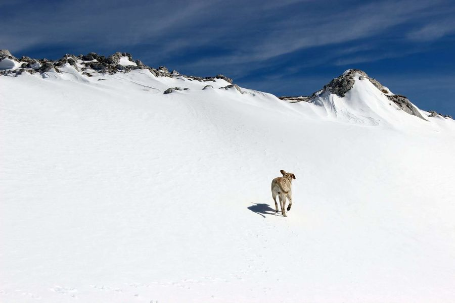 Snow Animal Nature Mountain Peak Outdoors Landscape Mountain No People Day Domestic Animals Dog❤ First Time