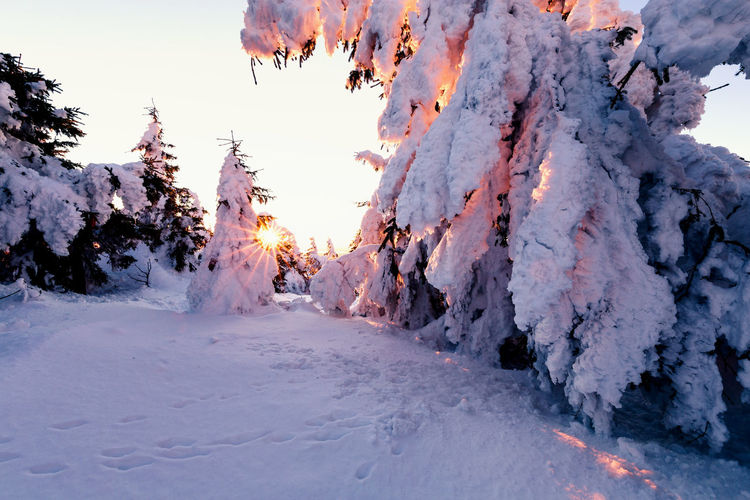Snow Cold Temperature Winter Beauty In Nature Sky Nature White Color Covering Frozen Scenics - Nature Tranquility Tranquil Scene Sunset Tree No People Day Environment Ice Outdoors Snowcapped Mountain Harz Harzmountains Brocken