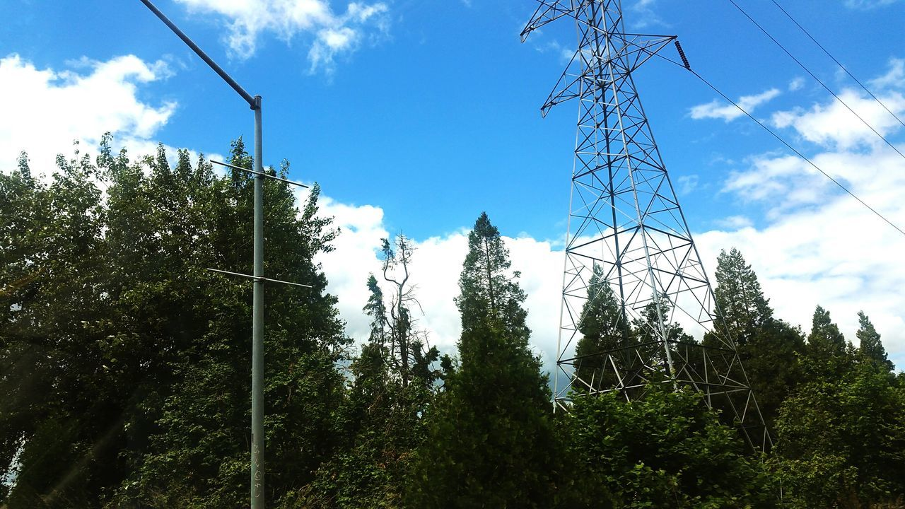 tree, low angle view, sky, growth, day, no people, electricity, cable, nature, outdoors, electricity pylon, plant, fuel and power generation, beauty in nature