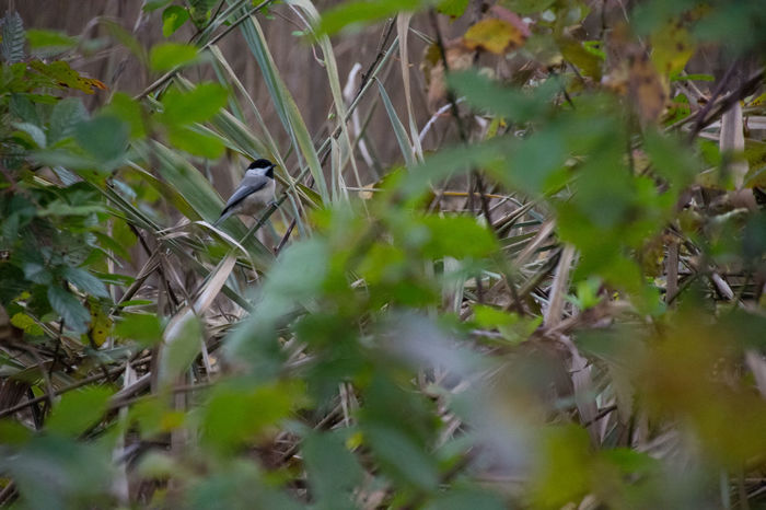 Foliage Plant Animal Themes Animal Wildlife Animals In The Wild Bird Day Grass Growth Nature No People One Animal Outdoors Perching Plant Selective Focus