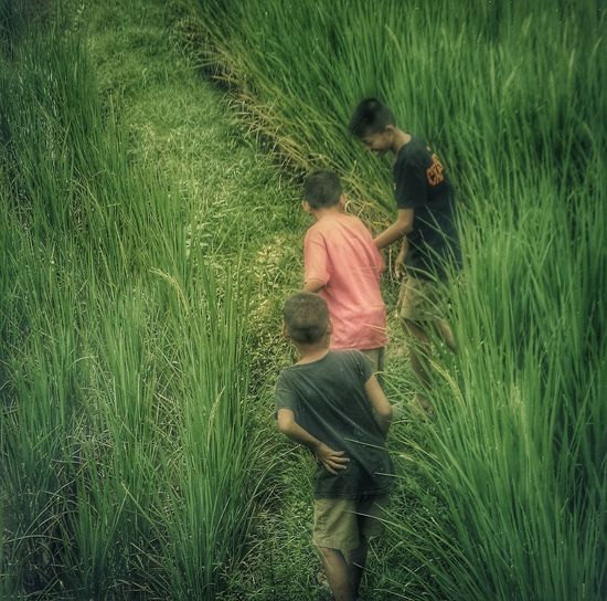 Hide And Seek Laughter The Great Outdoors - 2016 EyeEm Awards Paddy Fields Shades Of Green  Ricefield Childhood Happiness Playing Games Mischievous Character Special Day Mae Hong Son EyeEm Thailand