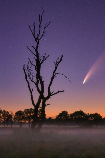 Silhouette bare tree on field against sky at night with neowise comet passing by